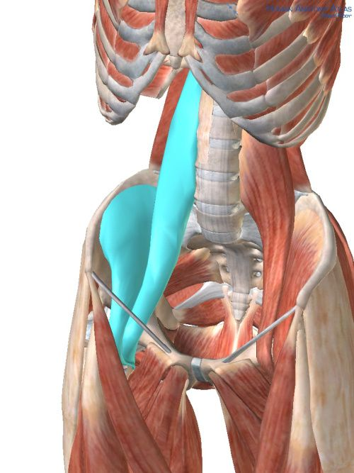 Psoas picture for blog